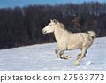 animal, equine, horse 27563772