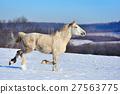 animal, equine, horse 27563775