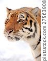 Tiger 27563908