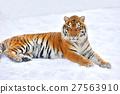 Tiger 27563910