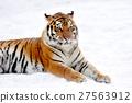 Tiger 27563912