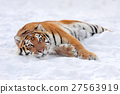 Tiger 27563919