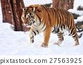 Tiger 27563925