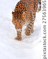 animal, leopard, snow 27563965