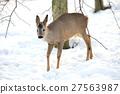 Deer 27563987
