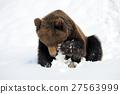 Bear in winter 27563999
