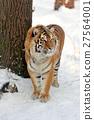 Tiger 27564001