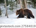 Bear in winter 27564019