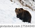 Bear in winter 27564040