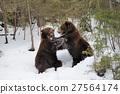 bear, cubs, animal 27564174