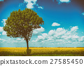 Yellow Rapeseed Flowers Field With Blue Sky 27585450