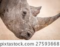 Side profile of a Black rhino. 27593668