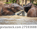 Elephants playing in the water. 27593688