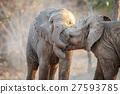 Two Elephants playing. 27593785