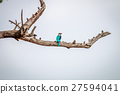 Woodland kingfisher on a branch. 27594041