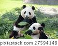 panda, pandas, buddy 27594149