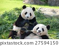 熊貓 親密 夥伴 27594150