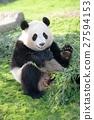 熊猫 陆生动物 寒喧 27594153