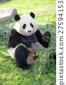 熊猫(2岁) 27594153