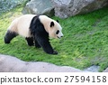 팬더, 판다, 걷다 27594158