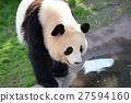 panda, pandas, waterfront 27594160