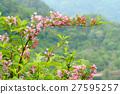 weigela hortensis, mountain trail, blossom 27595257