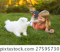 Little smiling girl playing with Samoyed puppy in  27595730