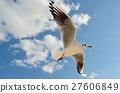红嘴鸥 野生鸟类 野鸟 27606849