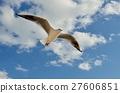 红嘴鸥 野生鸟类 野鸟 27606851