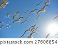 红嘴鸥 野生鸟类 野鸟 27606854