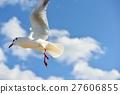 红嘴鸥 野生鸟类 野鸟 27606855