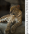 leopard panther 27606923