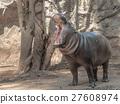 Pygmy hippo 27608974