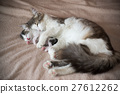 Cat sleeping with kitten and hugs him 27612262