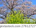 rape, blossoms, bloom 27612727