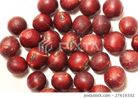 Red soybean 27616502
