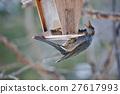 brown-eared bulbul, wild bird, bird 27617993