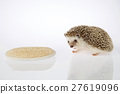 Isolated hedgehog and loofah on white background.  27619096