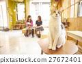 猫 猫咪 小猫 27672401
