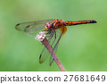 Orange Dragonfly 27681649