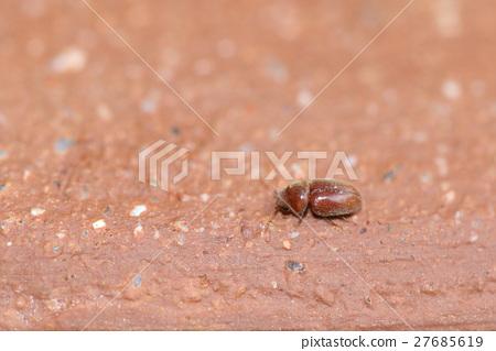 """생물 곤충 담배 시반무시, 한자로 쓰면 """"담배 죽음 번호 벌레"""" 소름 시스템의 이름입니다 27685619"""