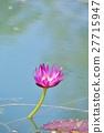 ดอกไม้ดอกบัวและแมลงปอ (Flower of Water Lily และ Dragonfly) 27715947