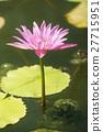ดอกไม้ของลิลลี่น้ำ 27715951