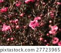 花朵 花 花卉 27723965