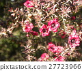花朵 花 花卉 27723966