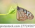 蝴蝶 旖斑蝶 蓓蕾 27724567