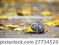 hamster sitting outdoor with autumnal leafs 27734520
