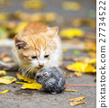 red cat caught the mouse 27734522