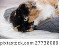 cat, pussy, gaze 27738089