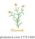 chamomile, daisy, bloom 27751484